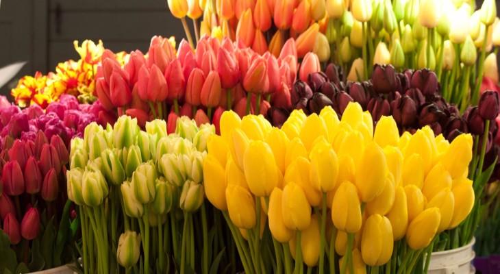 Какие цветы лучше подарить на 8 Марта