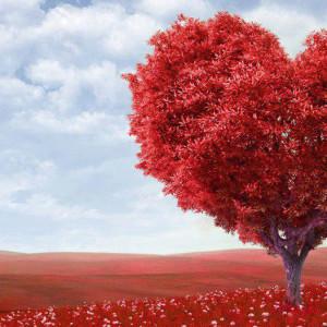 Идеи подарка на 27 лет свадьбы (свадьбу красного дерева)