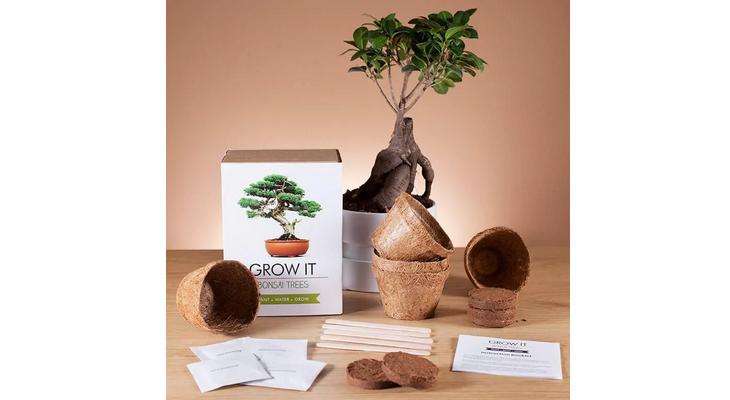 Набор для выращивания бонсай