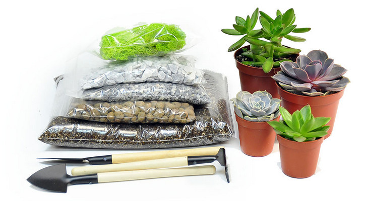 Набор для сборки флорариума