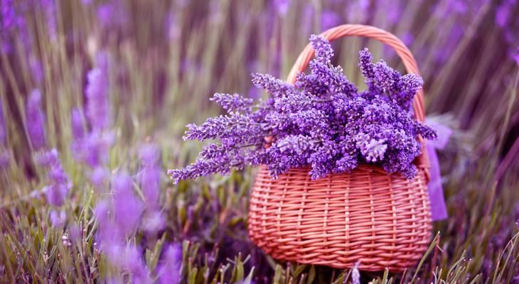 8 марта - День цветов и мелодий  - фото 12